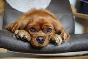 Hundebarnehage